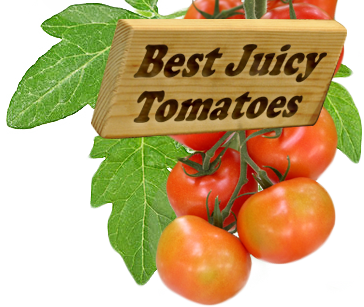Bestjuicytomatoes.com