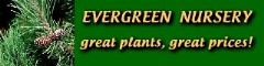 Evergreen Nursery Coupons & Promo codes