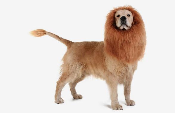 top 5 coolest pet supplies to spoil your four legged friend 4
